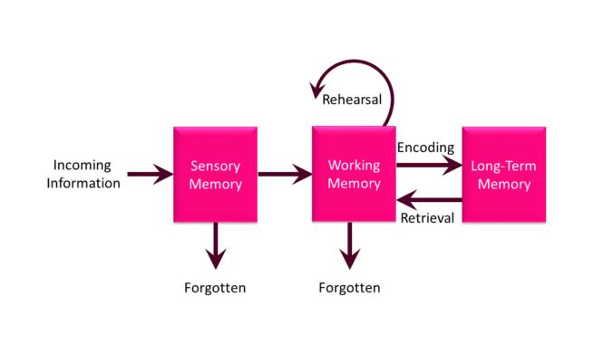 Long-term memory: Long-term memory flow chart